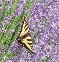 Marla Garden Photo